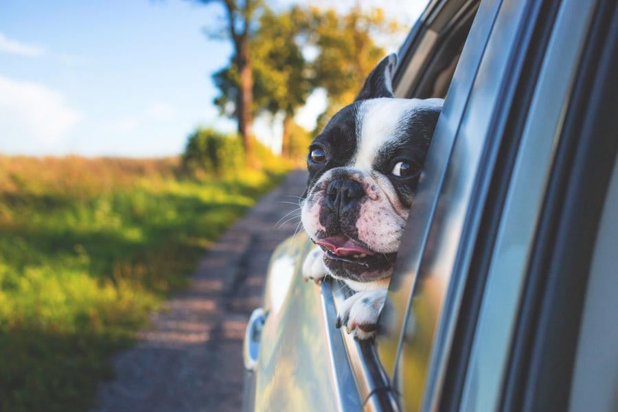 愛犬と楽しいドライブにするために覚えておきたい7つのこと~事前準備編~
