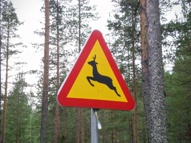 意外と多い野生動物との衝突事故『ロードキル』放置は絶対NG!衝突時の正しい対処法や予防法を確認!