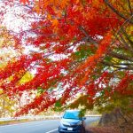 【関西編】秋のドライブに最適♪車で行けるオススメ紅葉狩りスポット7選!